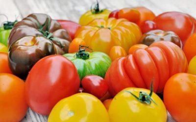 Toutes les tomates ne sont pas rouges…